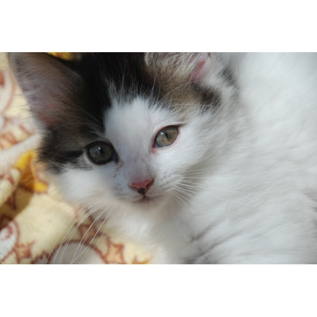 Photo of Frosty~Adoption Pending