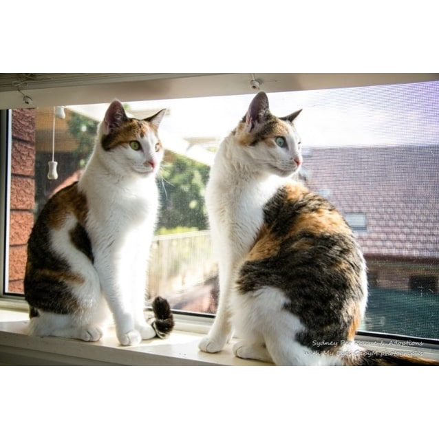 Photo of  Miki And Niki