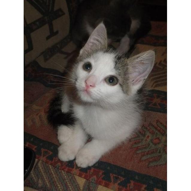 Photo of Casper