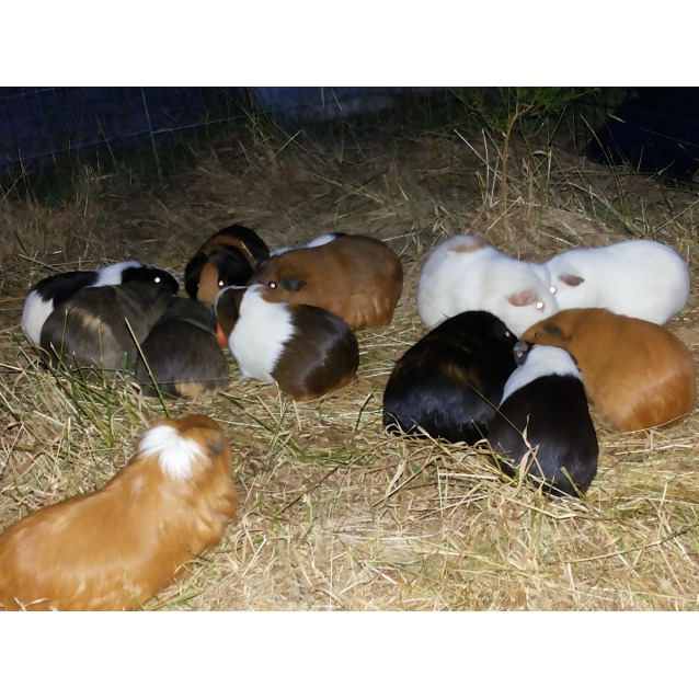 Photo of Sooo Many Gorgeous Piggies!