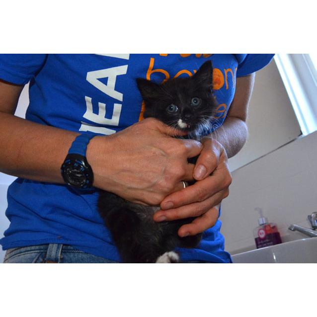 Photo of Taz