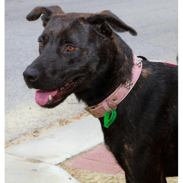 Photo of Peggy  * Foster Or Adopt*