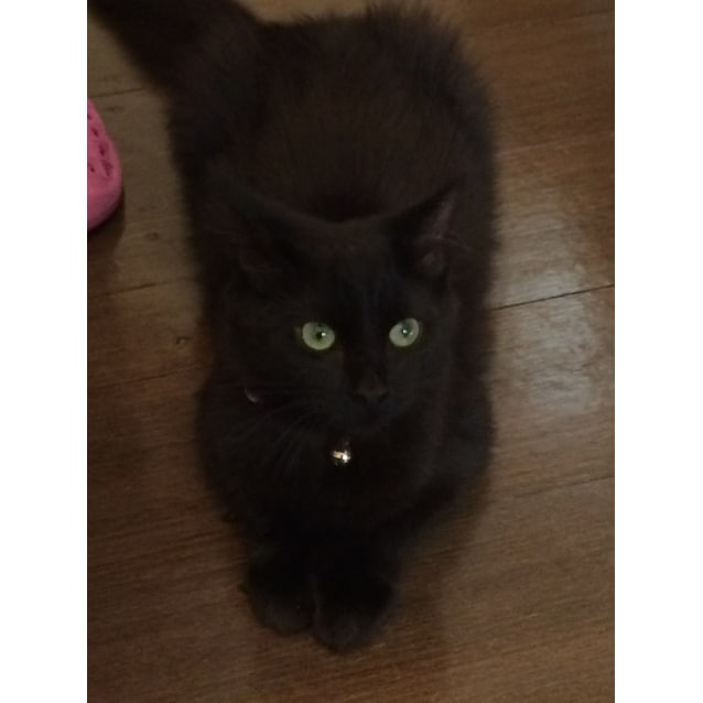 Photo of Fuzzball (Great With Kids Located In Glen Iris)