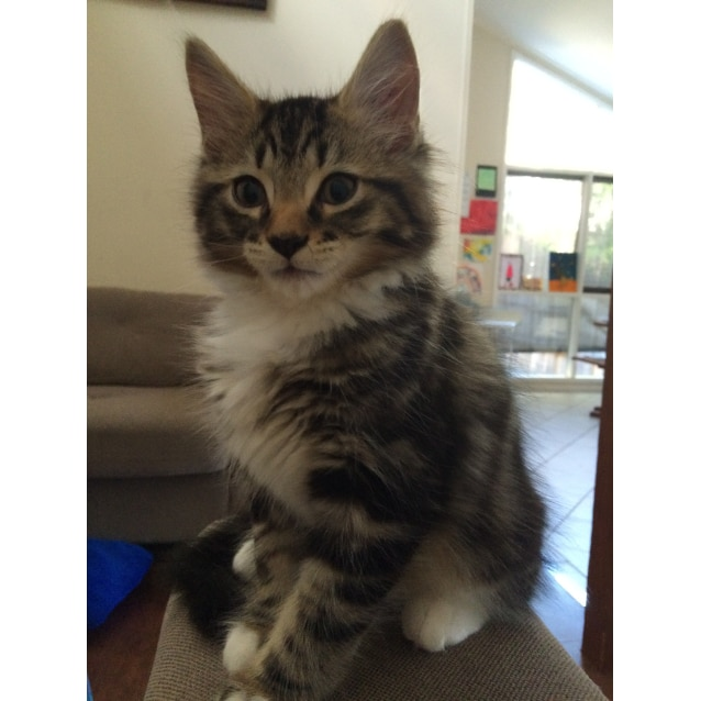 Photo of Mork (Located In Eltham)