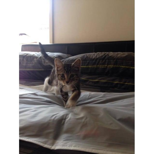 Photo of Felix (Located In Coburg)