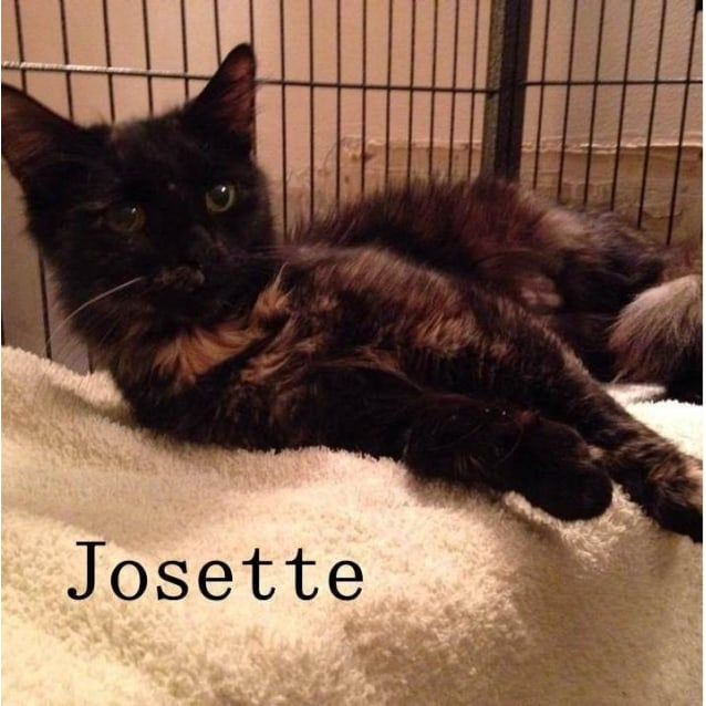 Photo of Josette (Located In Kilsyth)
