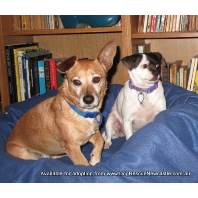 Photo of Tinkerbelle & Jacko ~ Senior Pair (Medical Hold)