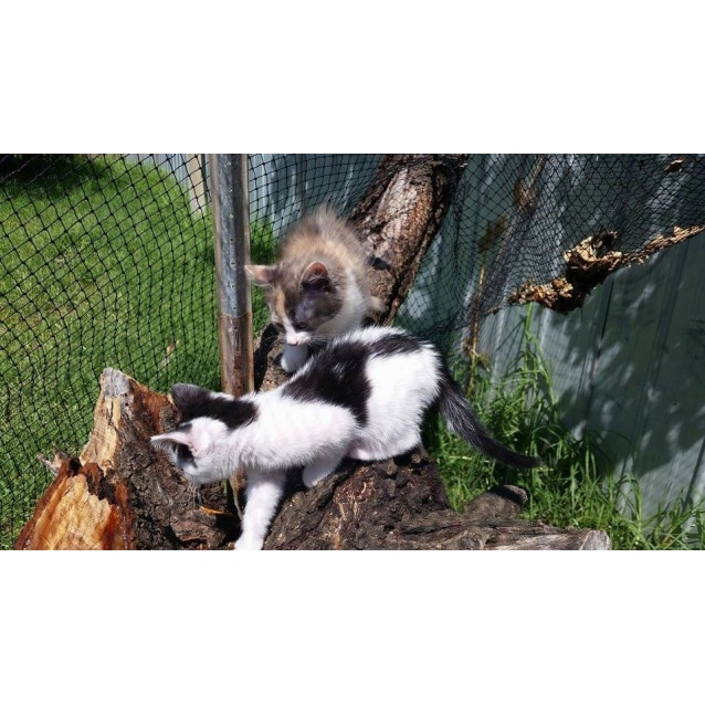 Photo of Sylvester   Cat And Kid Friendly