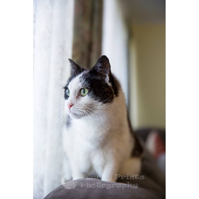Photo of Bessie