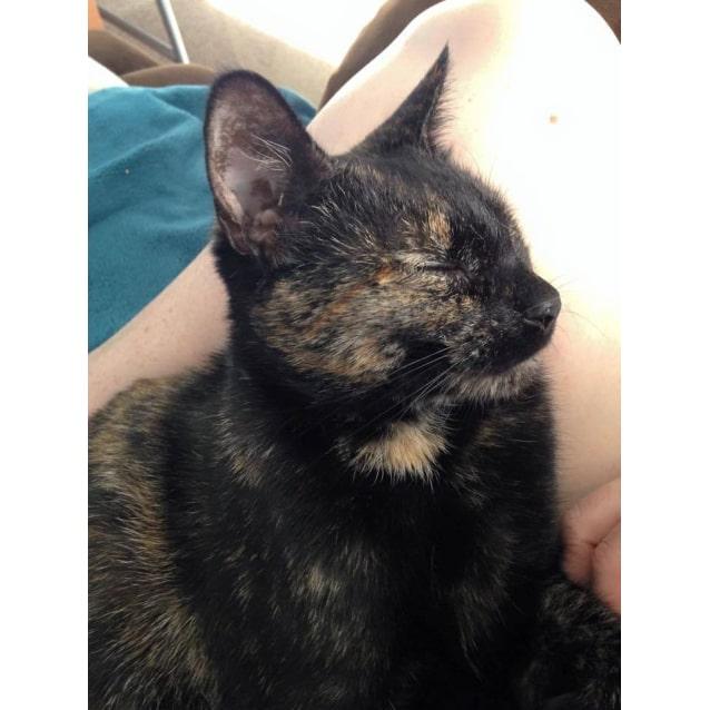 Photo of Uma Adoption Fee $150.00