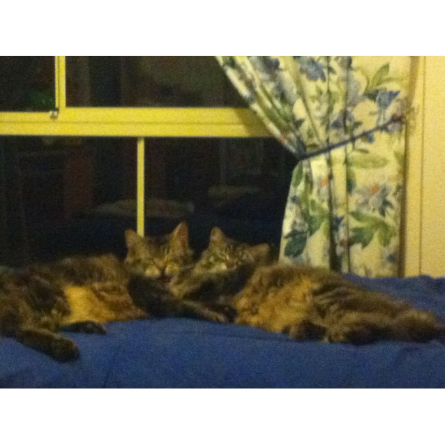 Photo of Boris And Bindi (Dual Adoption)