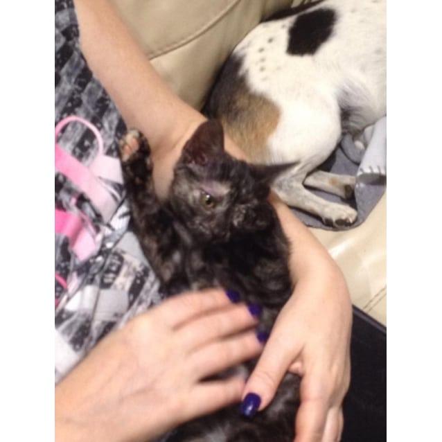 Photo of Lovebug Allira Is For Her Forever Home