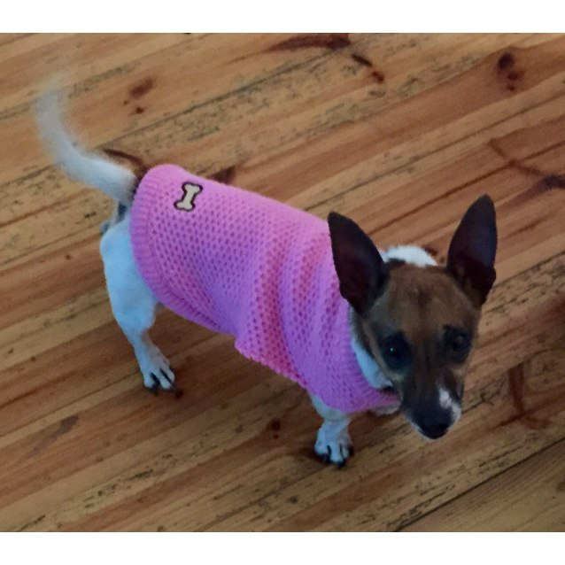 Photo of Dotty