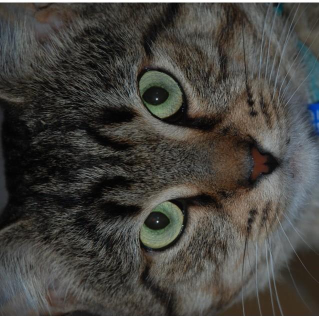 Photo of Samson~Smoocher!
