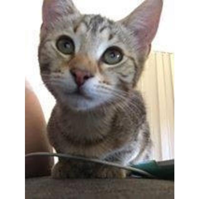 Photo of Friskas