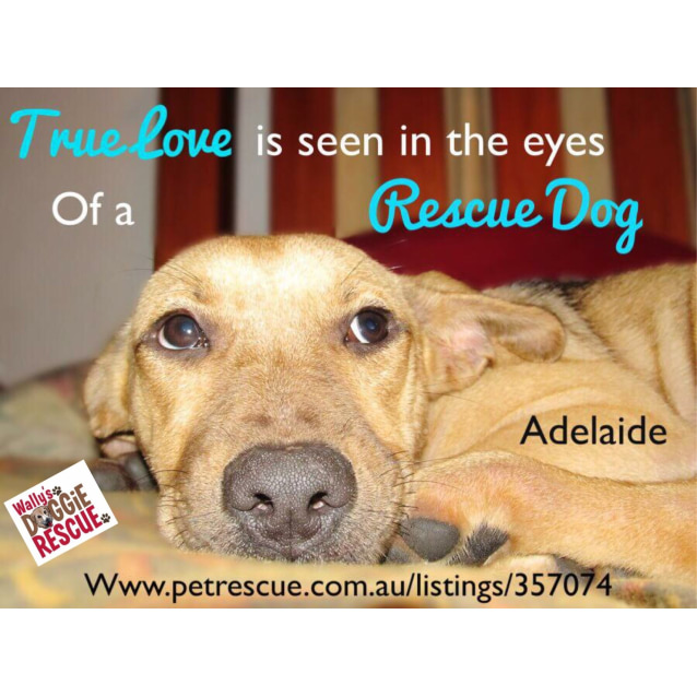 Photo of Adelaide (Cat Friendly)