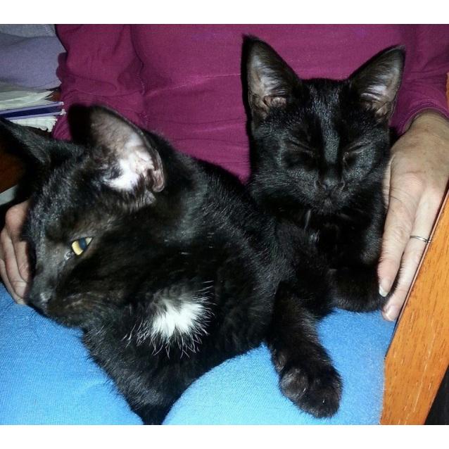Photo of Paige & Sebastian (Blackie Siblings)