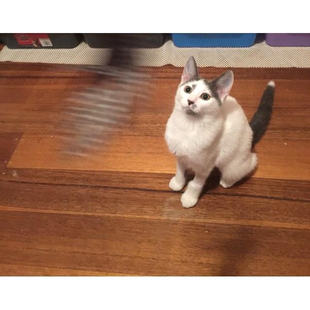 Photo of Gertie