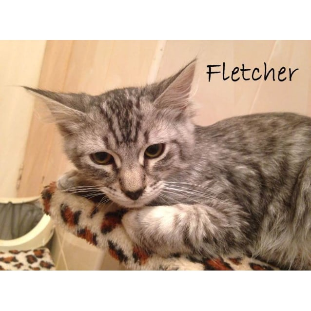 Photo of Fletcher (Located In Newport)