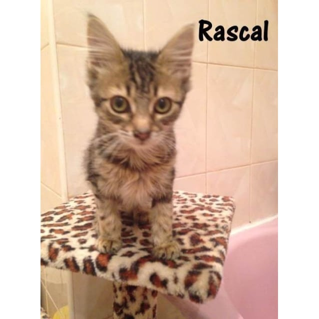 Photo of Rascal (Located In Newport)