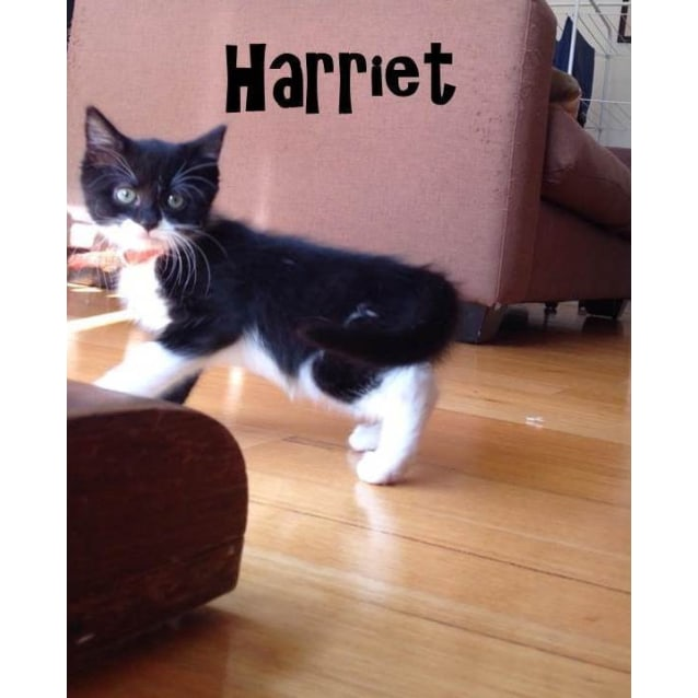 Photo of Harriet (Located In Coburg, And Brother Dexter)