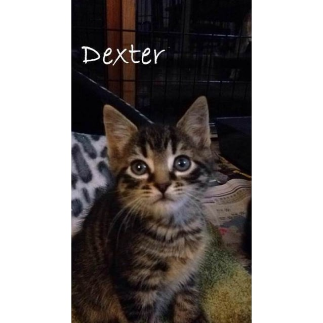 Photo of Dexter (Located In Coburg, And Sister Harriet)