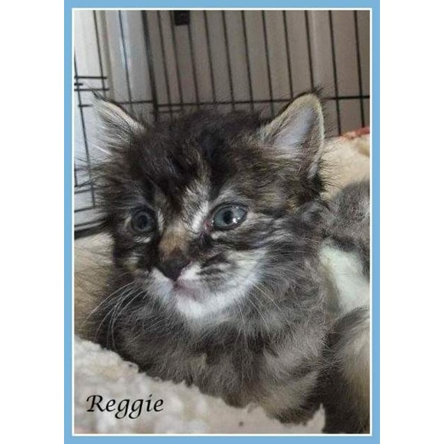 Photo of Reggie