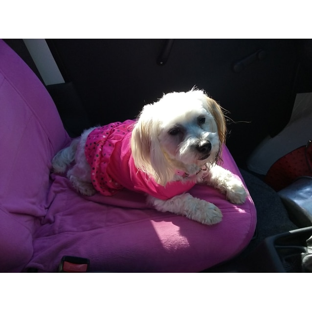 Photo of Indi ** A Sweet Sweet Precious Girl **