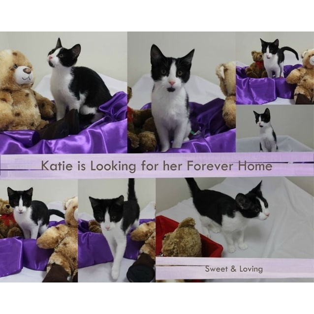 Photo of Lovebug Katie Is Looking For A Home