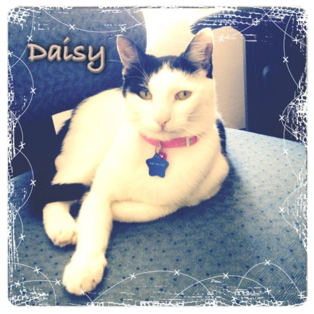 Photo of Daisy * On Trial With Her New Family