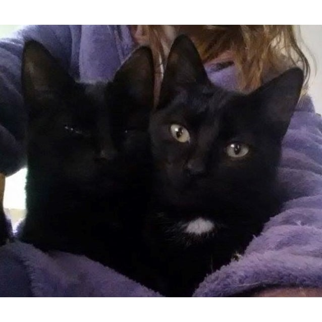 Photo of Paige & Sebastian (Blackie Siblings)