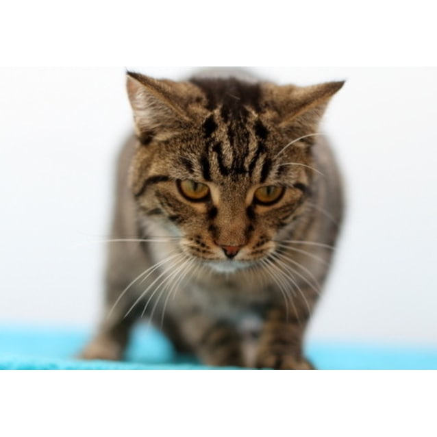 Photo of Pound Cats | Mandy