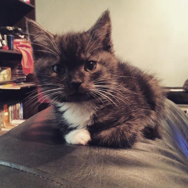 Photo of Snape