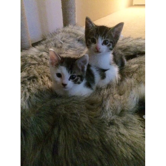 Photo of Mowgli & Baloo