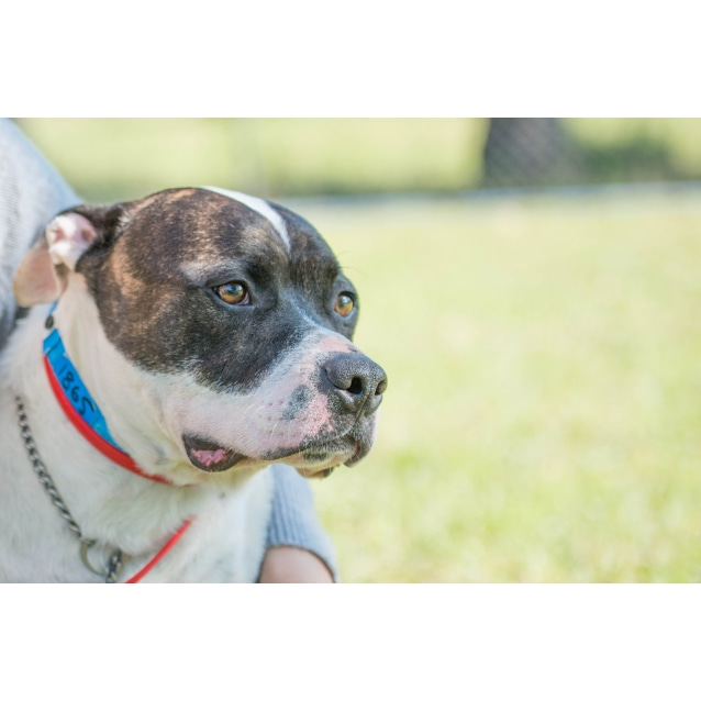 Photo of Patches ~ #1501865