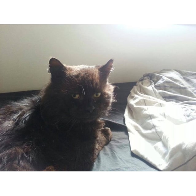 Photo of Salem The Bear Cat