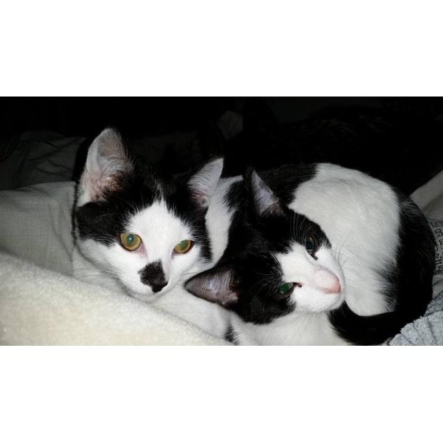 Photo of Orca & Oreo (Located In Bundoora)