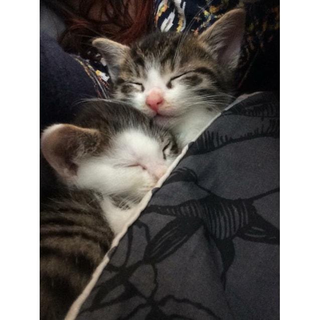 Photo of Mowgli & Baloo
