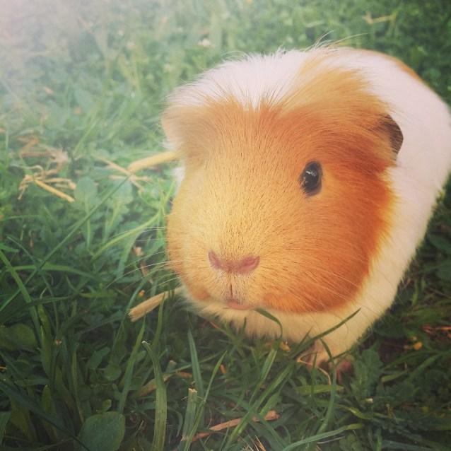 Photo of Robbie