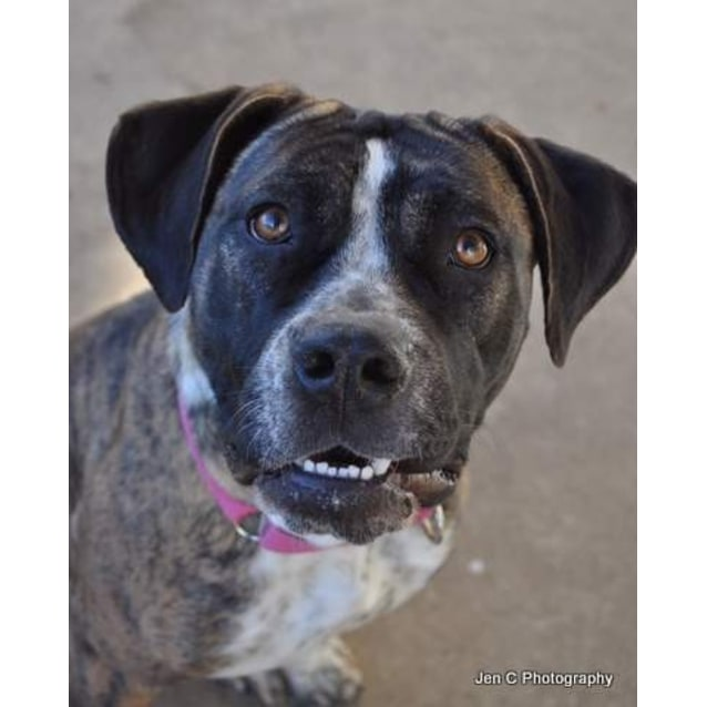 Photo of Stella ** A Quiet Gentle Girl **