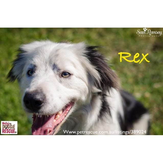 Photo of Rex