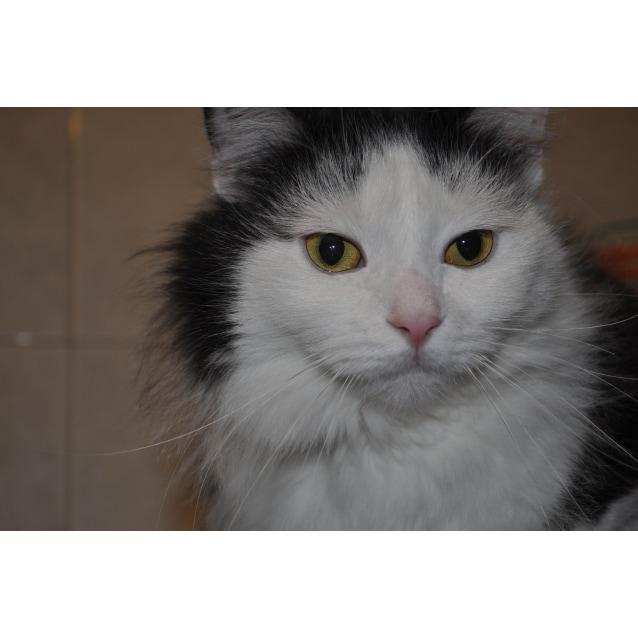 Photo of Jezebel