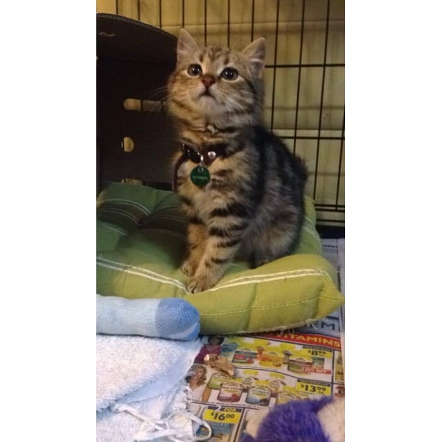 Photo of Piper (Located In Coburg)