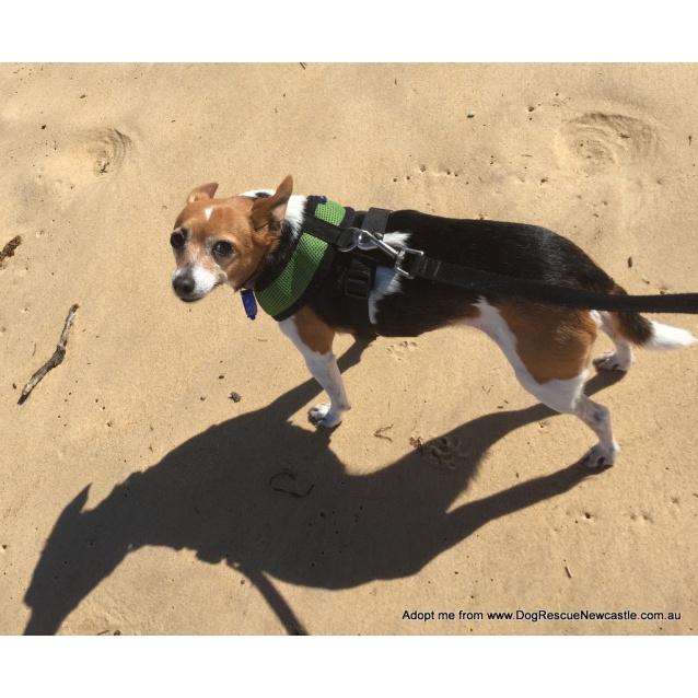 Photo of Sootie ~ Senior Mini Foxy, Girl (Trial 10/10/15)