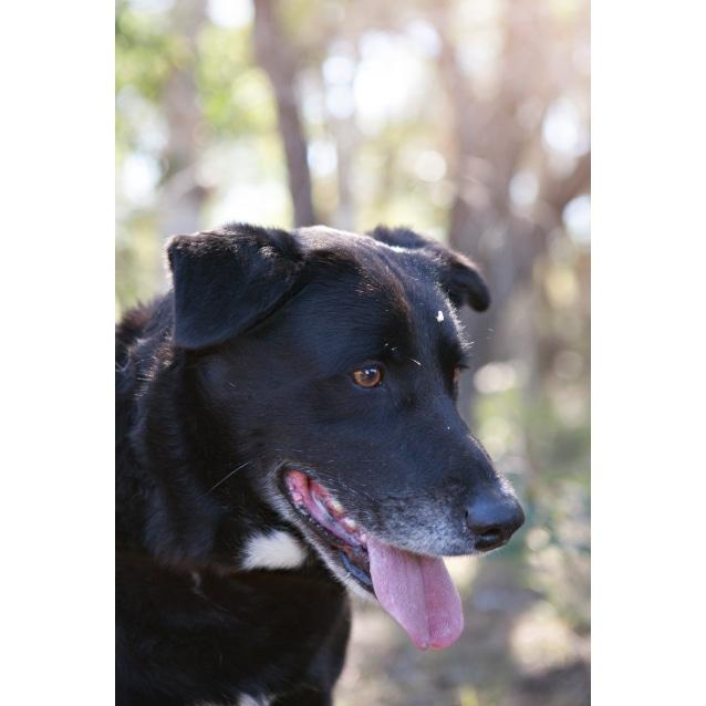 Photo of Kobi