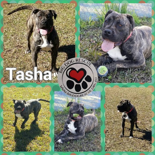 Photo of Tasha