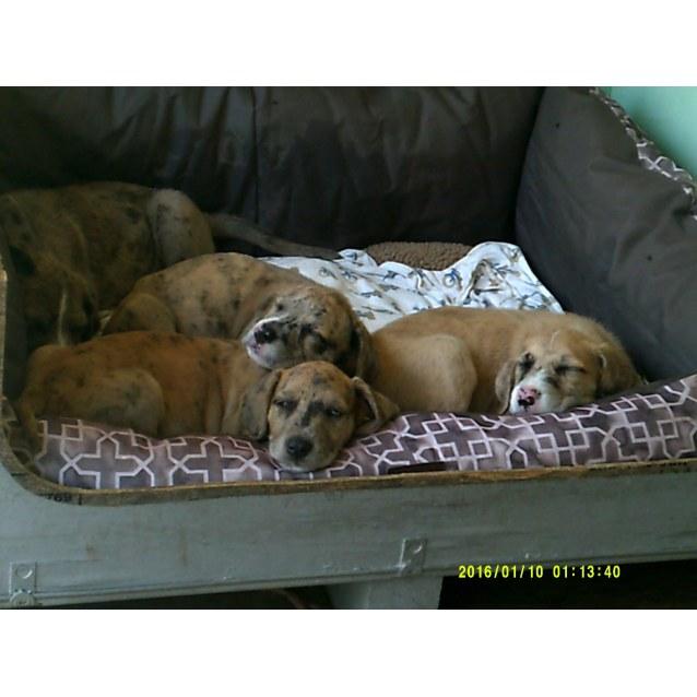 Photo of Pups 1 Boy 3 Girls