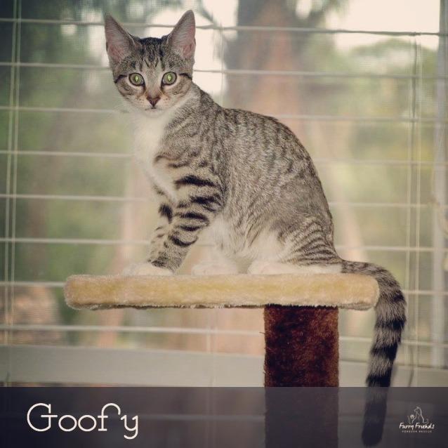 Photo of Goofy