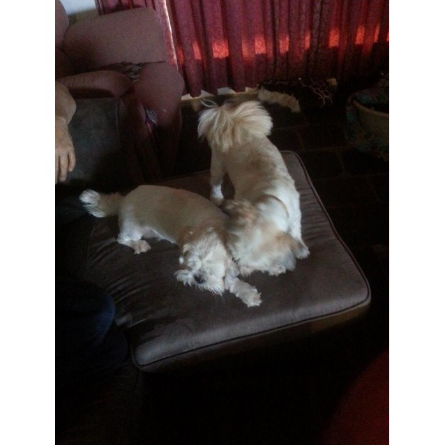 Photo of Ivy And Zues