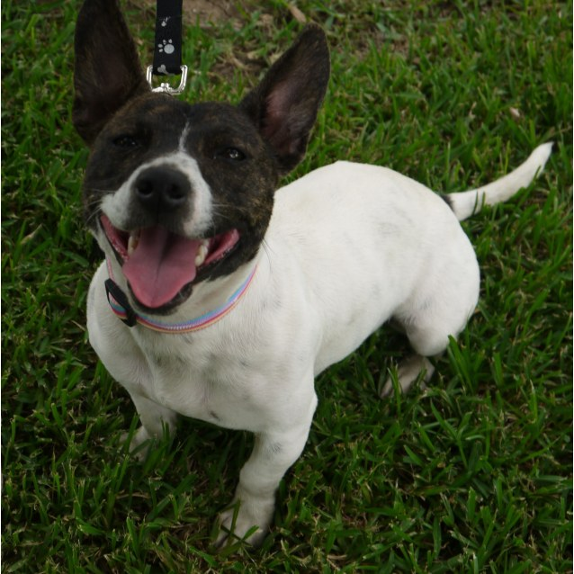 Frenchton Dog Rescue
